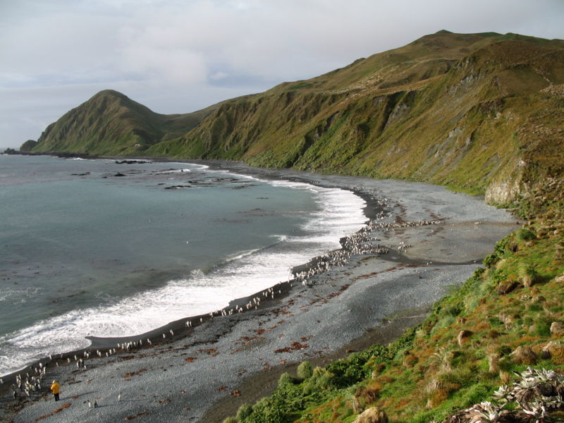 Macquarie Island.jpg